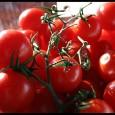 Alimenti contaminati in Italia Pomodori ciliegini provenienti dal Marocco contaminati, pericolosi per la salute, vi sono state ritrovate tossine prodotte dal batterio Escherichia Coli. L'avvertimento arriva dalla Repubblica Ceca, che […]